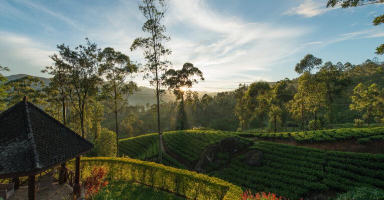 Sri Lanka, Lujo y aventura en el jardín del Edén